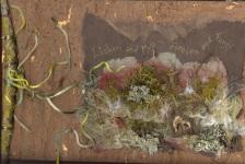 Lichen & moss cover